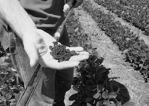 Soybean Field with Healthy Soil (B/W)